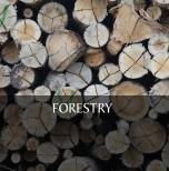 6). FORESTRY